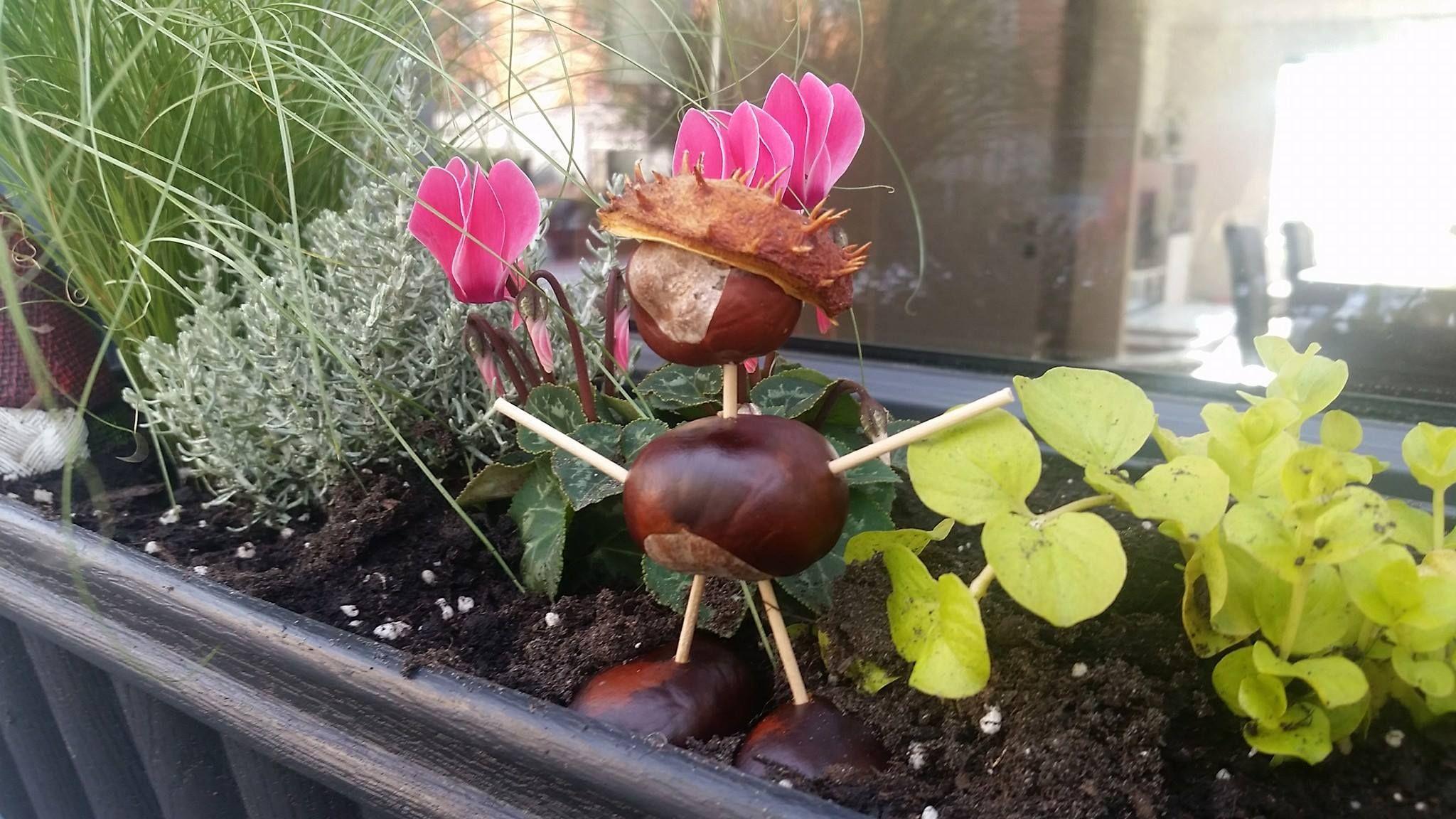 Ideensammlung zu #Deko und #Food im #Herbst.  http://markosgartenblog.de/ideensammlung-zum-herbst/