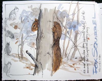nature journal sketchbook notebook dairy words and images drawing