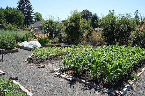 garden care vegetable #garden #gardencare Mid summer easy care vegetable garden design