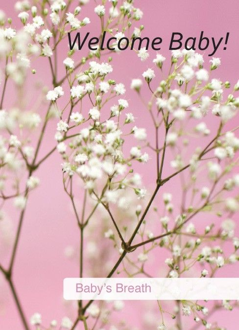 We Could Decorate With Lots Of Babys Breath In Vases Babys Breath Pink Baby Shower Garden Baby Showers