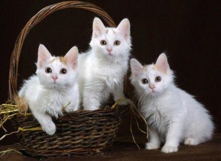 Animals And Pets Panosundaki Pin