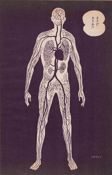 vasculature.