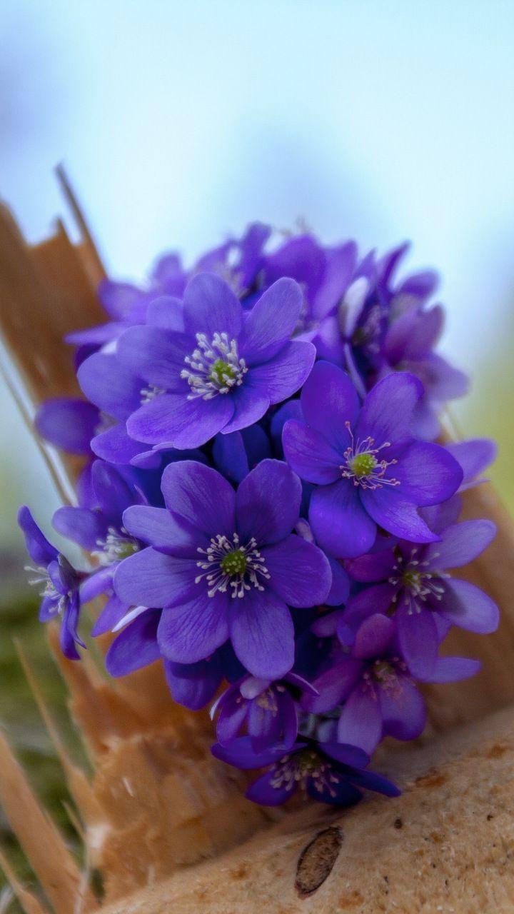 Blue flowers, bloom, wild, 720x1280 wallpaper #blueflowerwallpaper Blue flowers, bloom, wild, 720x1280 wallpaper #blueflowerwallpaper