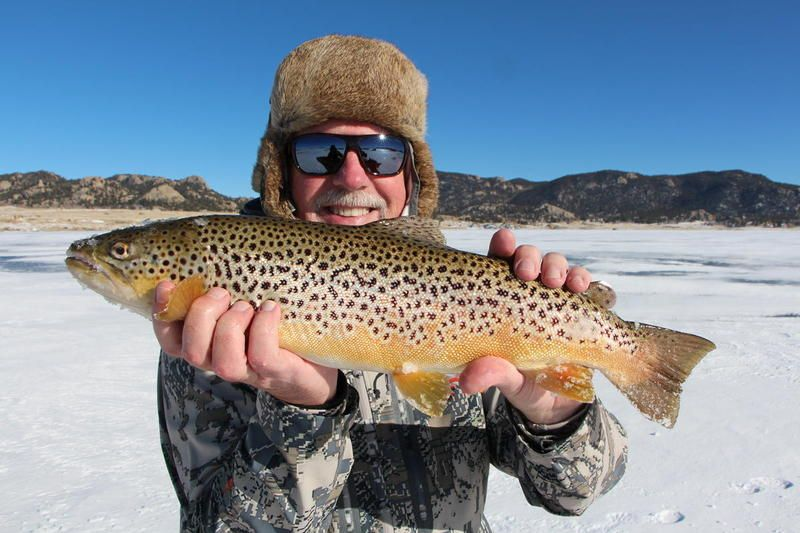 Eleven mile co pics four pound 11 mile brown trout in for 11 mile fishing report