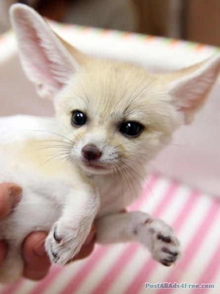 Epageindia Post Free Ads And Free Business Listing In India Cute Kawaii Animals Baby Animals Cute Animal Pictures