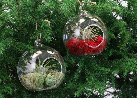 Pin On Clear Ornaments
