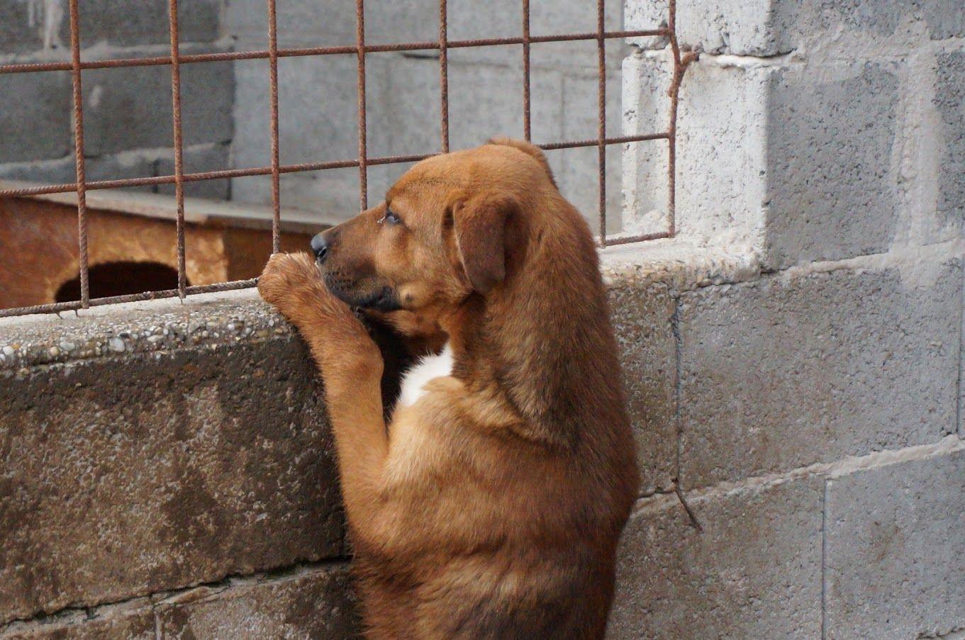 Pin von Christian Bayer auf Tierheimleben in Not