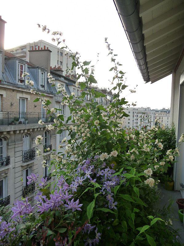 Photo of Balcon transformé en une année – Paris côté jardin