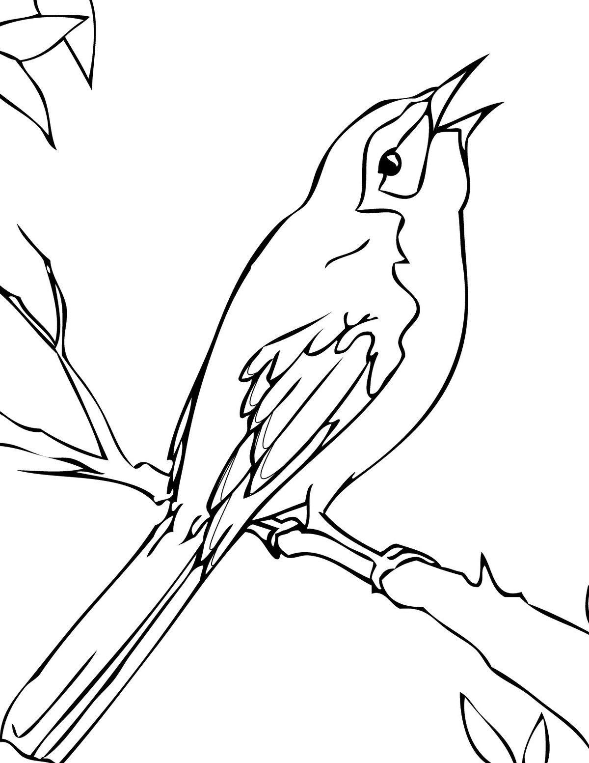 Florida Mockingbird Coloring Page