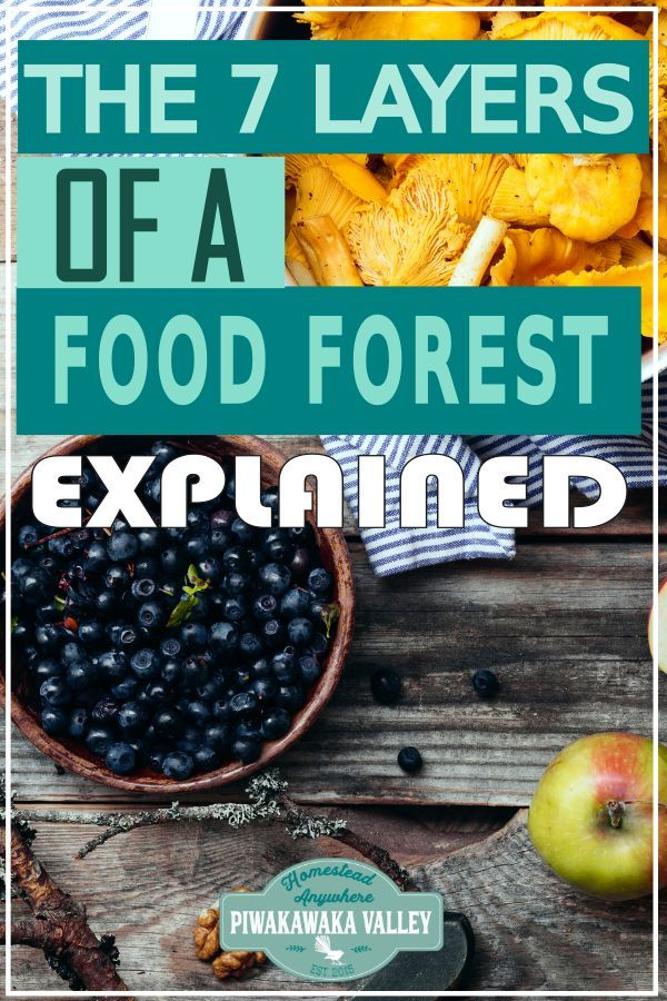 The 7 layers of a Food Forest Explained | A List of Plants for a Food Forest