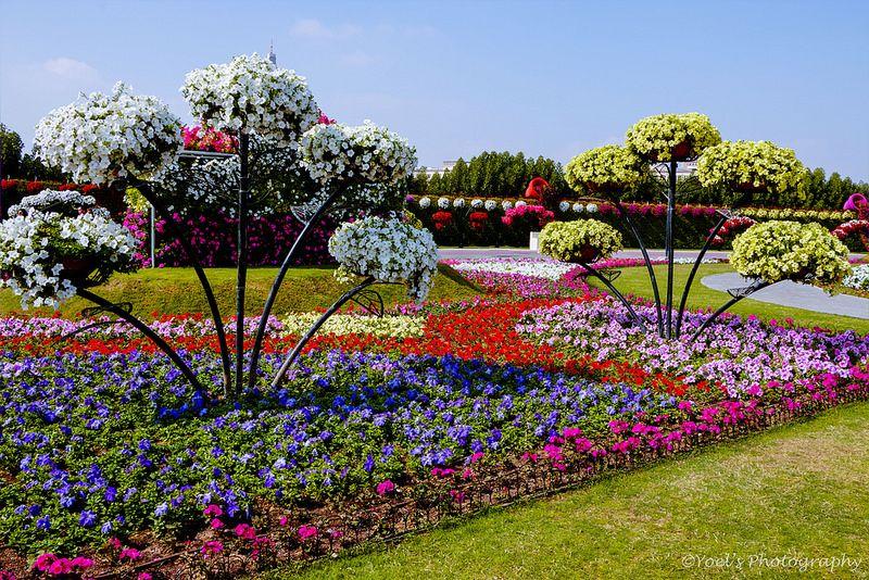 Miracle Garden, Dubai Dubai garden, Botanical gardens