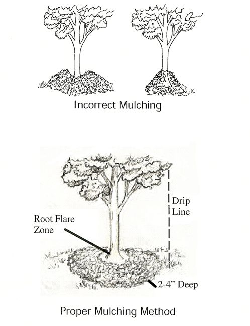 """Deep Mulch Gardening , No More Than 2 4"""" If Using Finely Textured Or Double Shredded"""