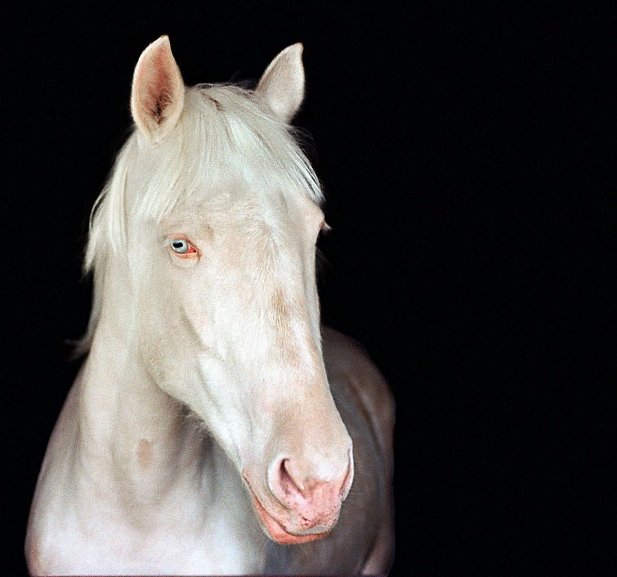12 Wunderschone Albino Pferde Die Dir Den Atem Rauben Werden