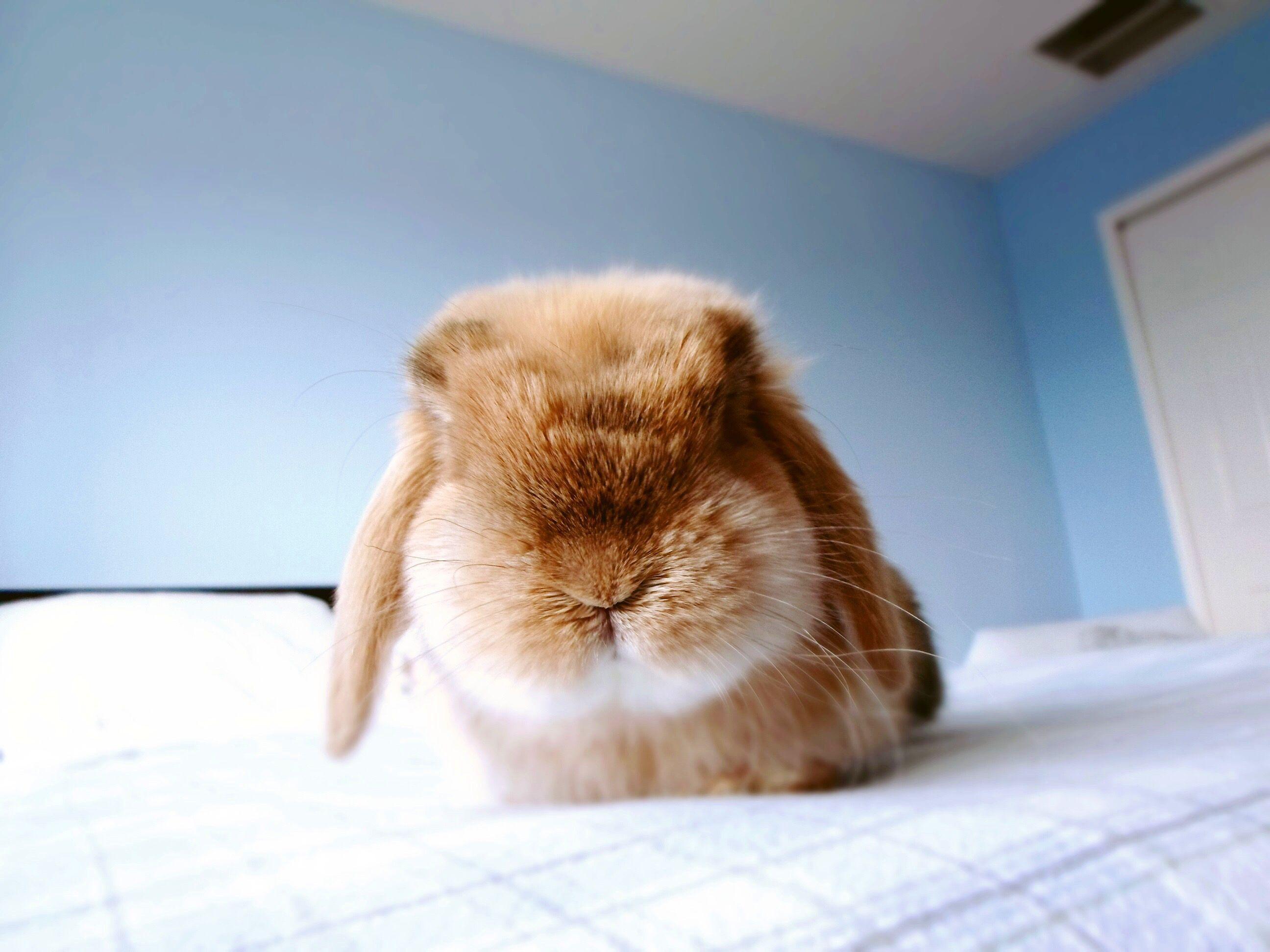 Baby bunny Bunnies