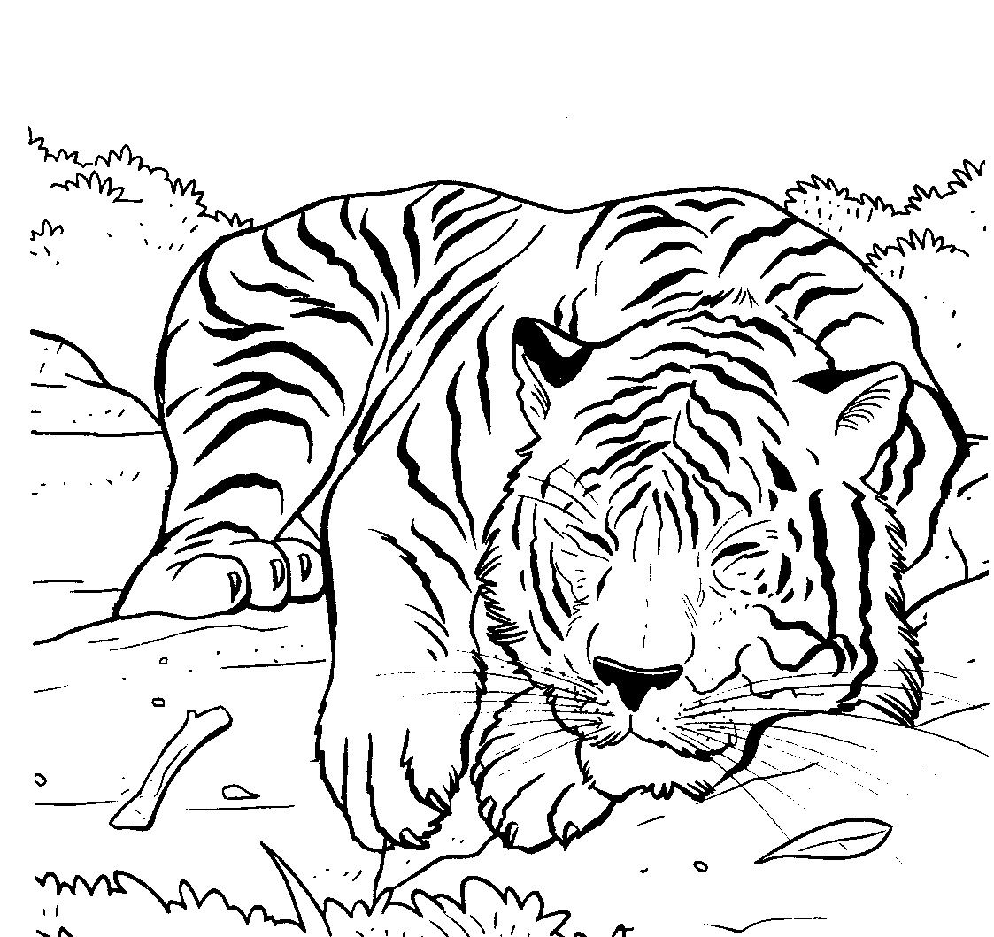 Animals Page Cartoon Drawing Of A Cute Tiger Cub Coloring An Illustration White And Its Habitat
