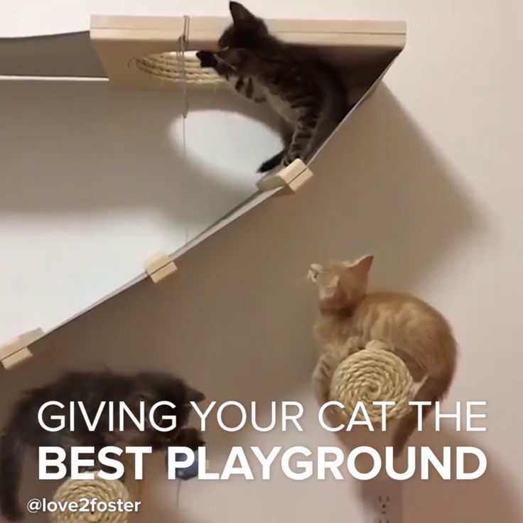 This furniture is purrrfect for cats! #kittens #cats #DIY #playground #home
