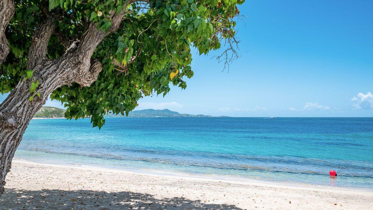 Caribbean Zoom Virtual Backgrounds Make Boring Meetings Better Beach Background Background Caribbean