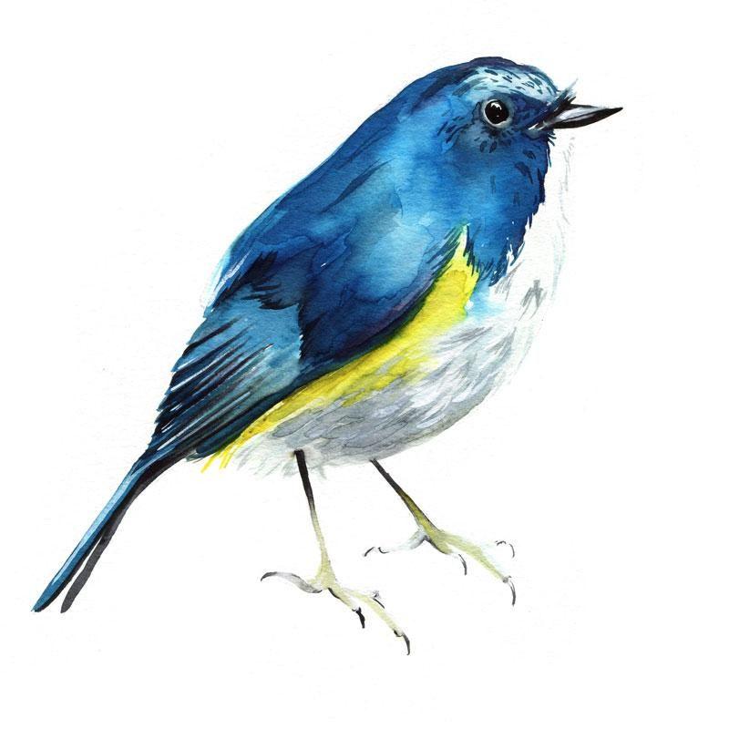 Bluebird Watercolor Kit Let S Make Art Watercolor Kit Ink In Water