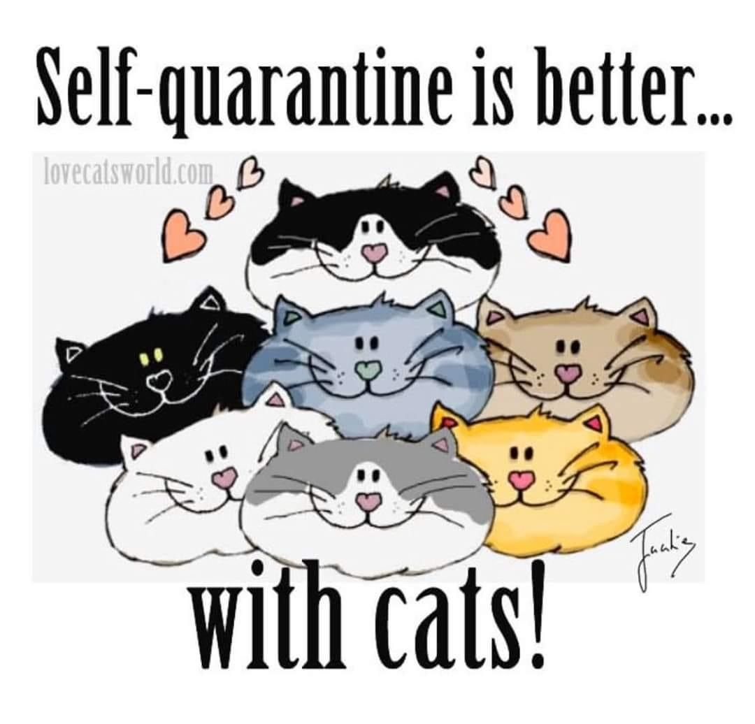 Pin By Mary Thomas On All Things Pets Pet Info Animal Humor Love Animals In 2020 Cat Quotes Funny Cat Quotes Cat Mom