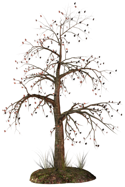 Dead Tree Png Clipart Tree Images Tree Art Dried Tree Branches