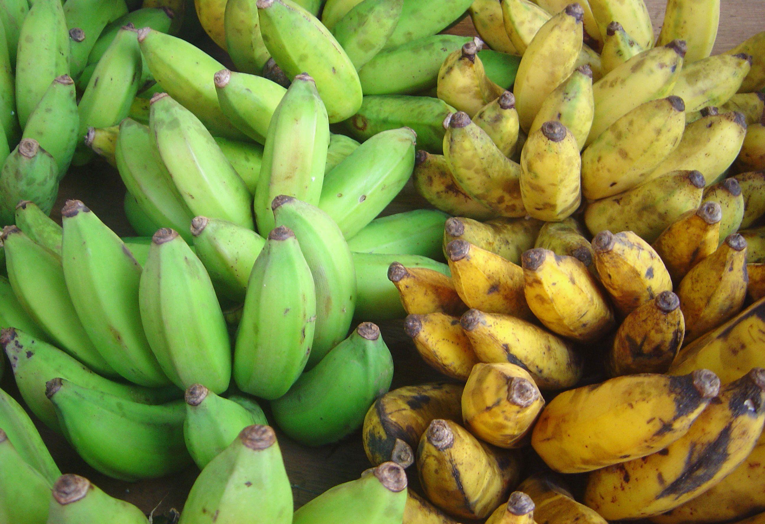 Plantains Vs Bananas Plantains Banana Fruit