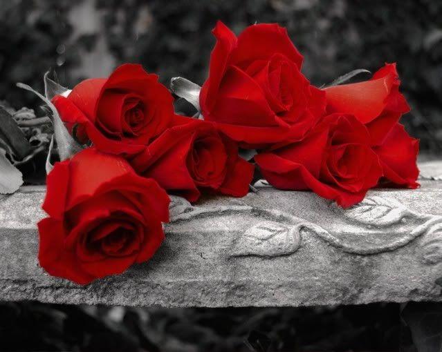 Red Roses Via Photobucket Beautiful Pinned In Memory Of Dorothy
