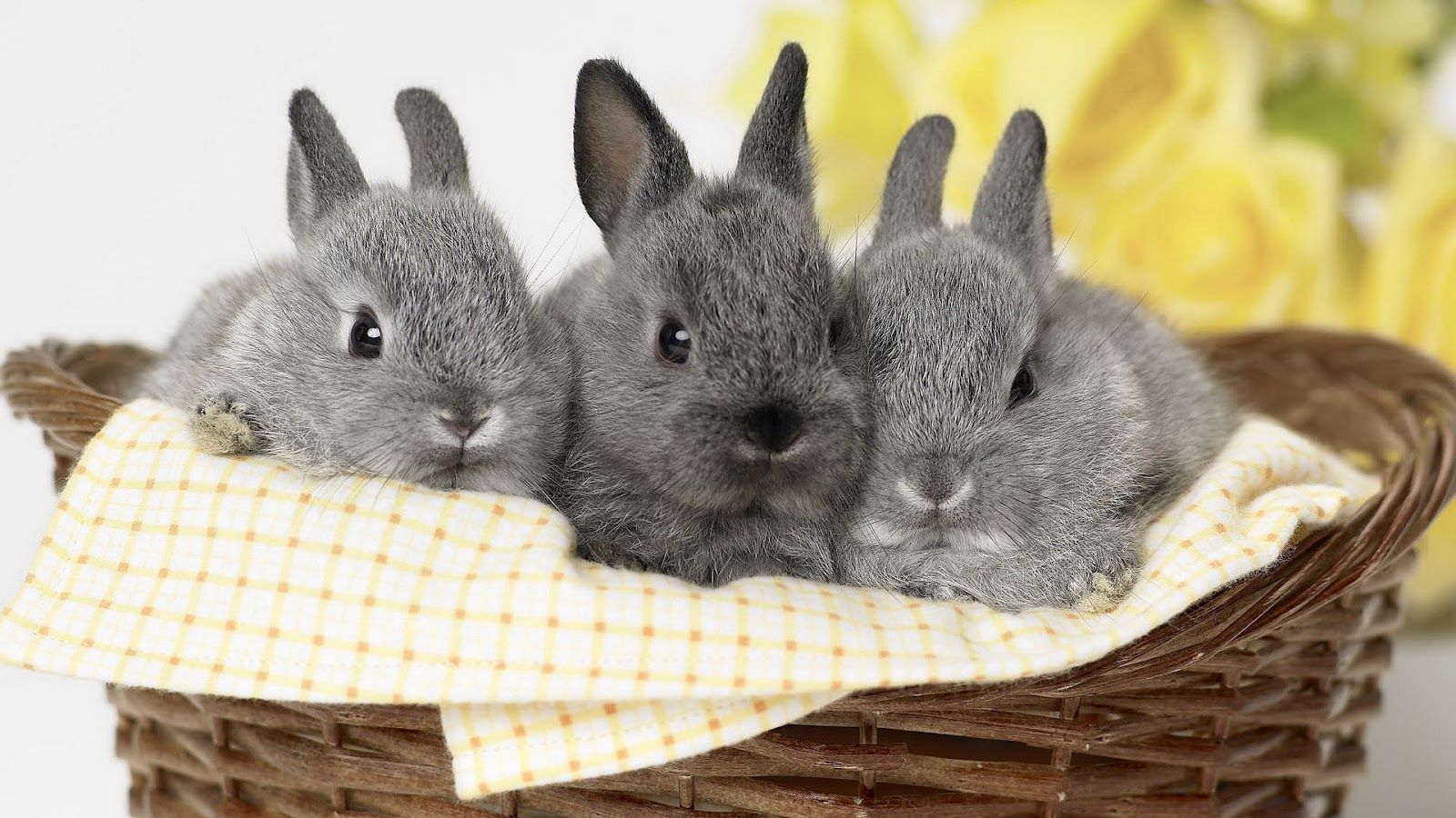 super schattige konijntjes :D