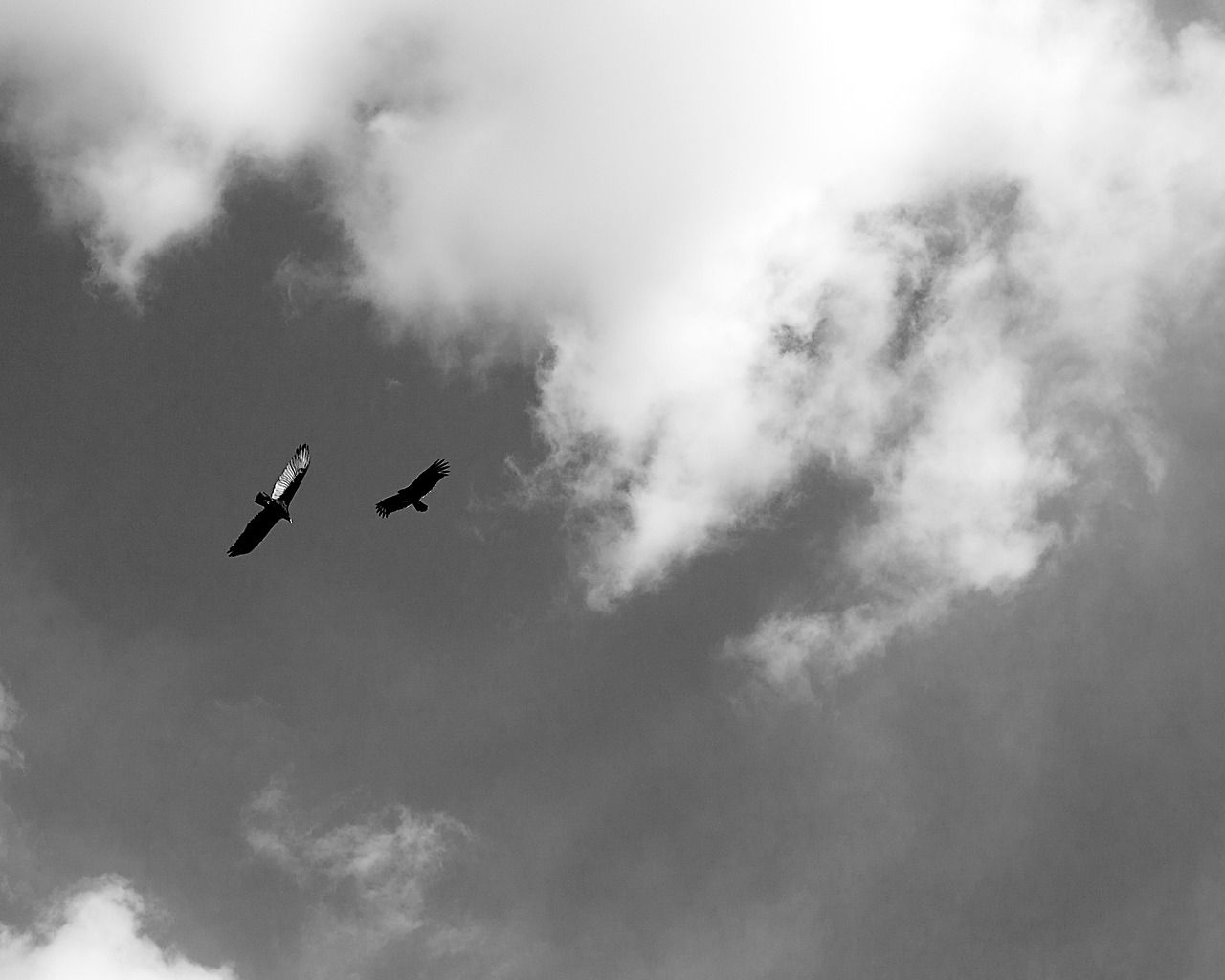 momentspause: Turkey buzzards, Hueco Tanks State...