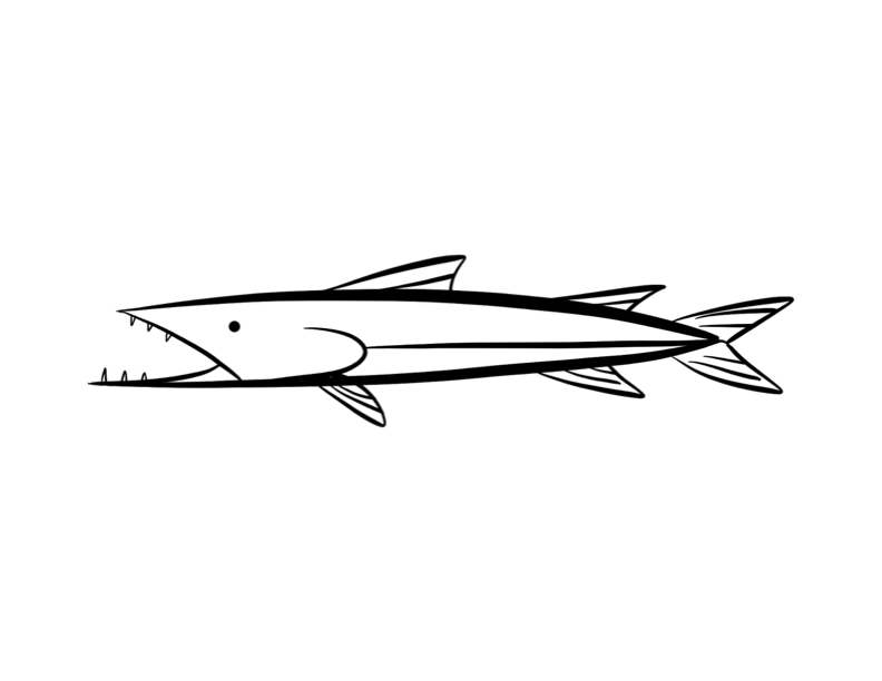 Barracuda Coloring Page