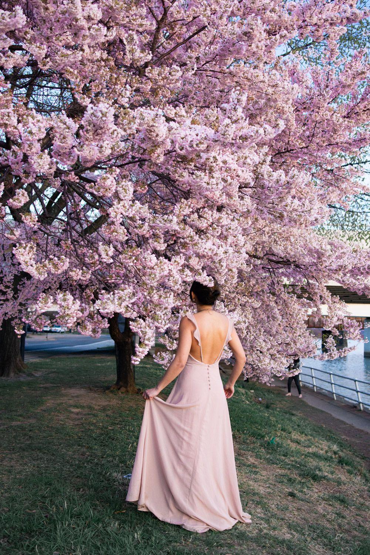The 2021 Guide To Washington Dc Cherry Blossom Peak Bloom Cherry Blossom Dc Cherry Blossom Festival Cherry Blossom Washington Dc