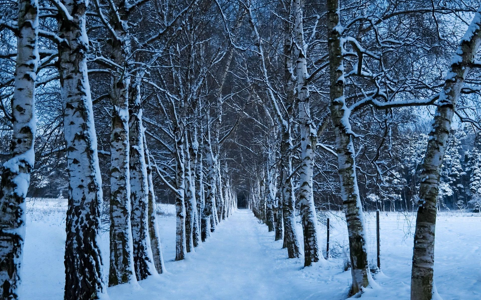 wallpapers for photo hd winter in high res free