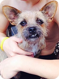 McKinney, TX - Terrier (Unknown Type, Small) Mix. Meet Annie, a dog for adoption. http://www.adoptapet.com/pet/10874233-mckinney-texas-terrier-unknown-type-small-mix