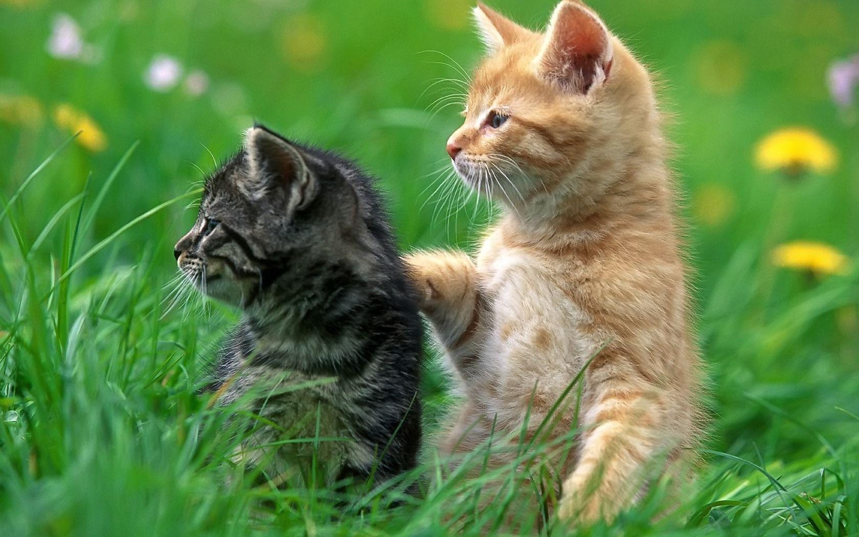 Download Gambar Wallpaper Kucing - Kumpulan Wallpaper