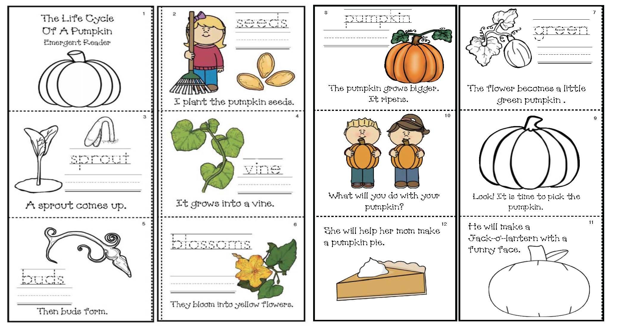 Life Cycle Of A Pumpkin Activities Emergent Reader And Crafts [ 1100 x 2071 Pixel ]
