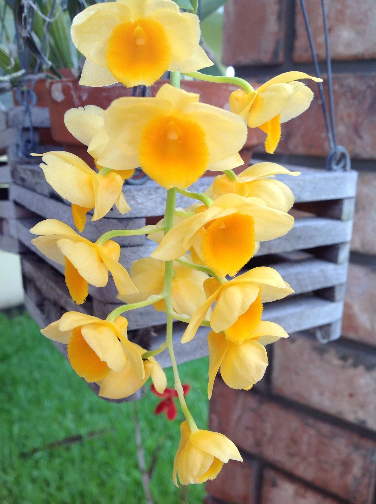 Tiny Yellow Flowers My Orchids Pinterest Yellow Flowers