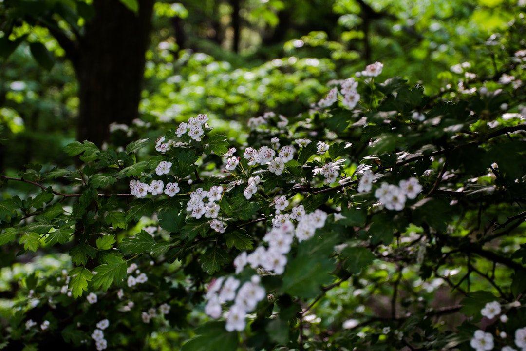 Backyard Medicine - medicinal plants new zealand