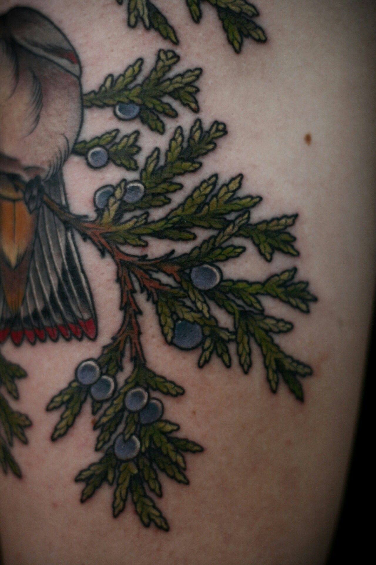 Park Art|My WordPress Blog_Saniderm Tattoo Wrap How Long