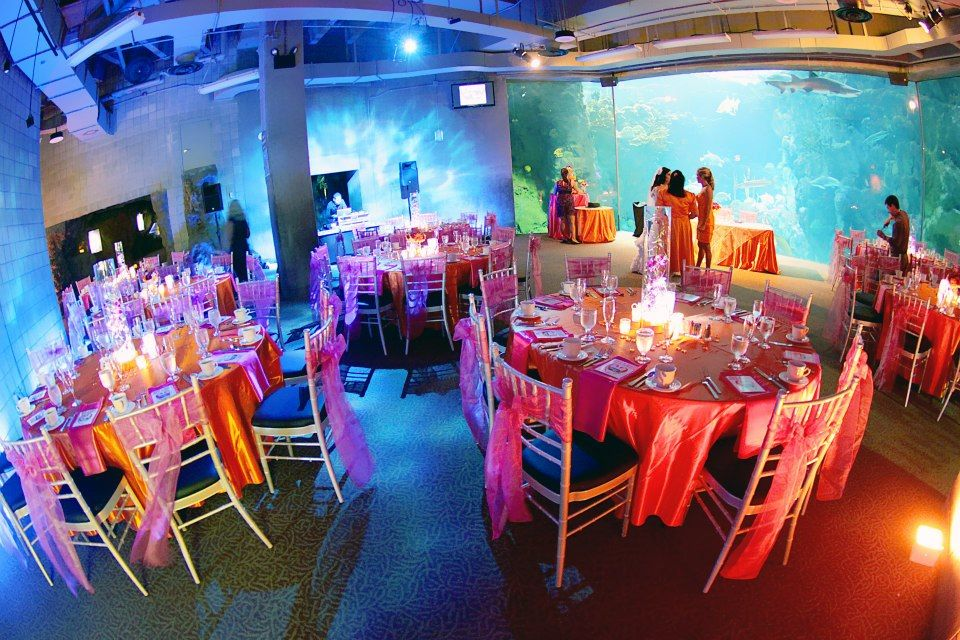Wedding Reception Orange And Pink Penguin Themed Wedding At The