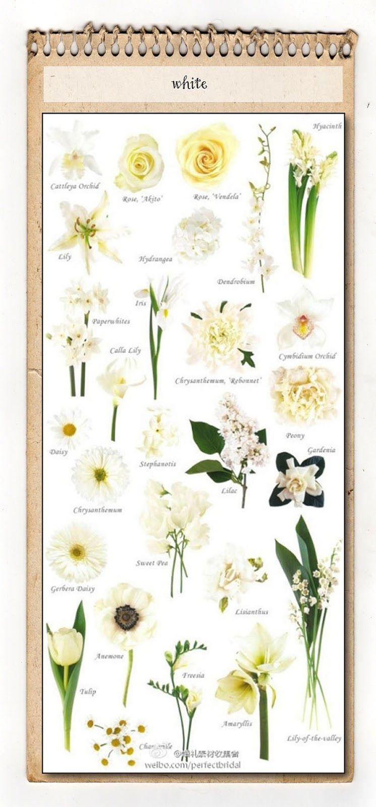 White Flower Chart Helpful Tools Pinterest Wedding Flowers