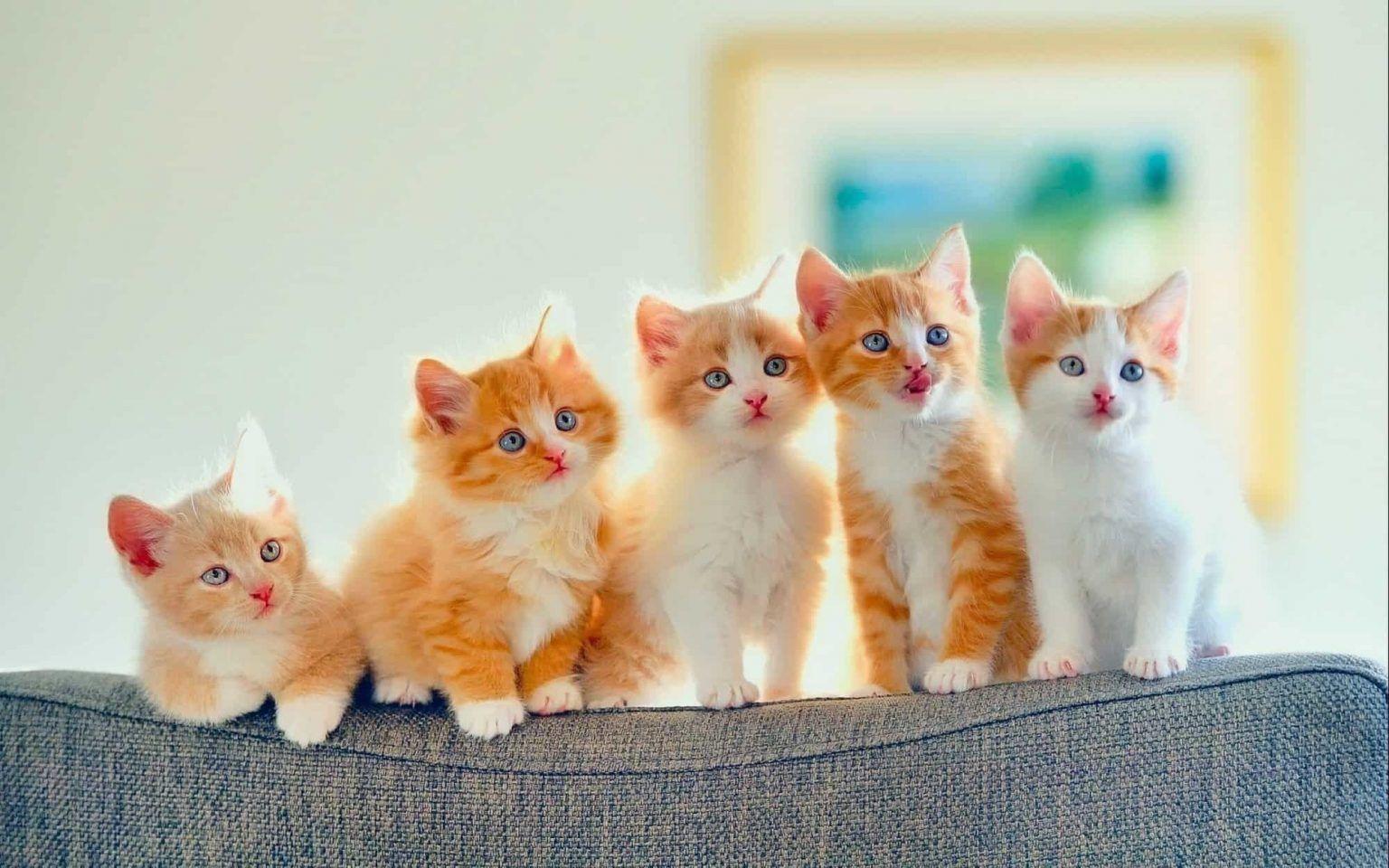 أهم 180 دلالة لتفسير حلم القطة في المنام موقع مصري In 2021 Kittens Cutest Cute Cats Cats And Kittens