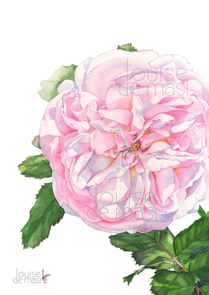 Pink Rose En 2020 Aquarelle Aquarelle Rose Et Comment Peindre