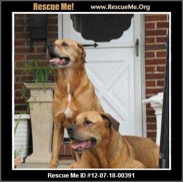 Salisbury Md Rottweiler Mix Meet Caesar A Dog For Adoption