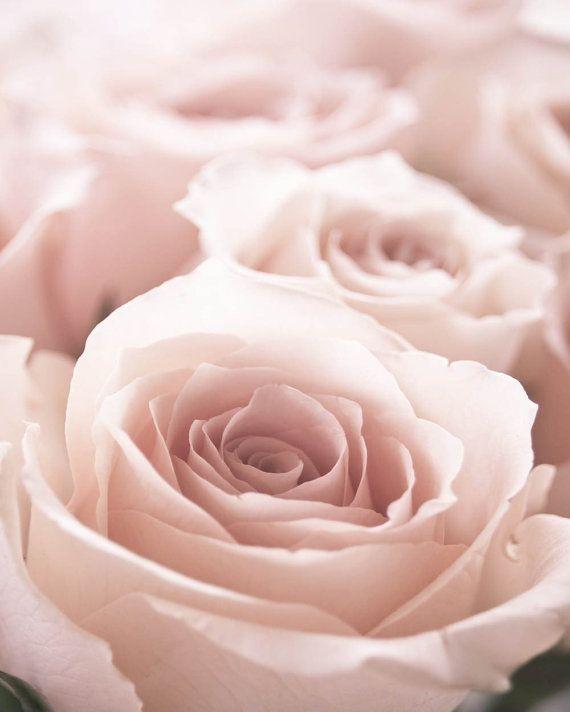 Nature Print Pink Rose Nursery Decor Pink and White Decor Bedroom Decor Rose Photography Pastel Decor Romantic Decor