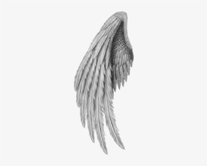 Angel Wings Freetoedit Gold Angel Wings Png Free Transparent Png Download Pngkey Wings Png Angel Wings Png Angel Wings Drawing