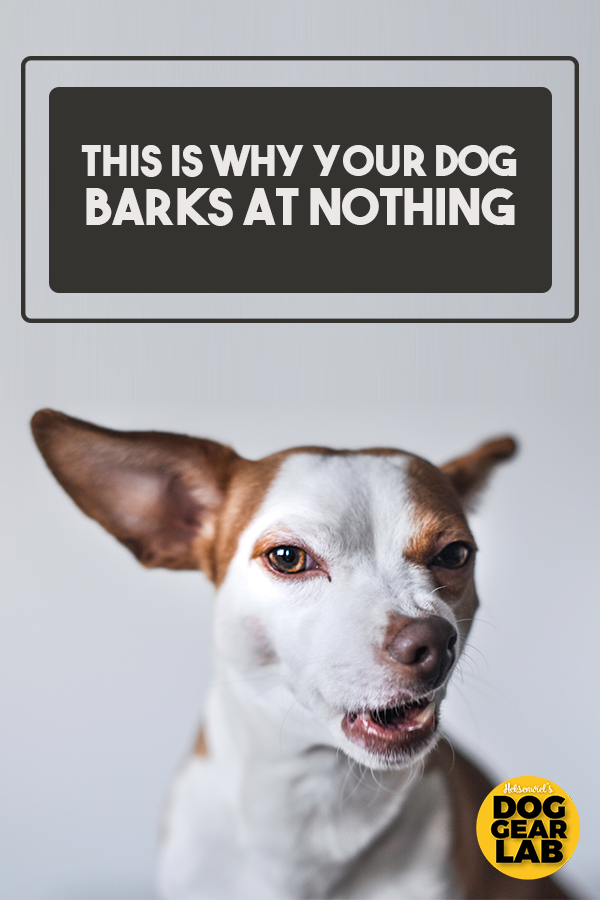 This Is Why Your Dog Barks At Nothing Dog Barking Dog Barking At Nothing Dogs