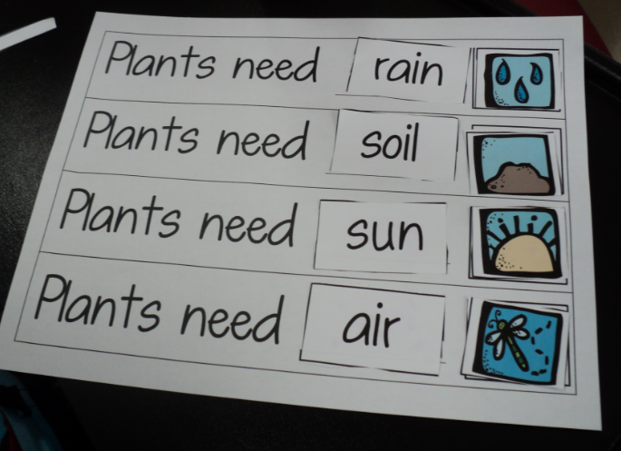 Plant Needs Special Kind of Class What Plants Need – Plant Needs Worksheet