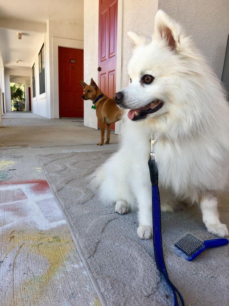Pin By Connie Sperlazza On Kimo Dog Sitting Dog Boarding Cute
