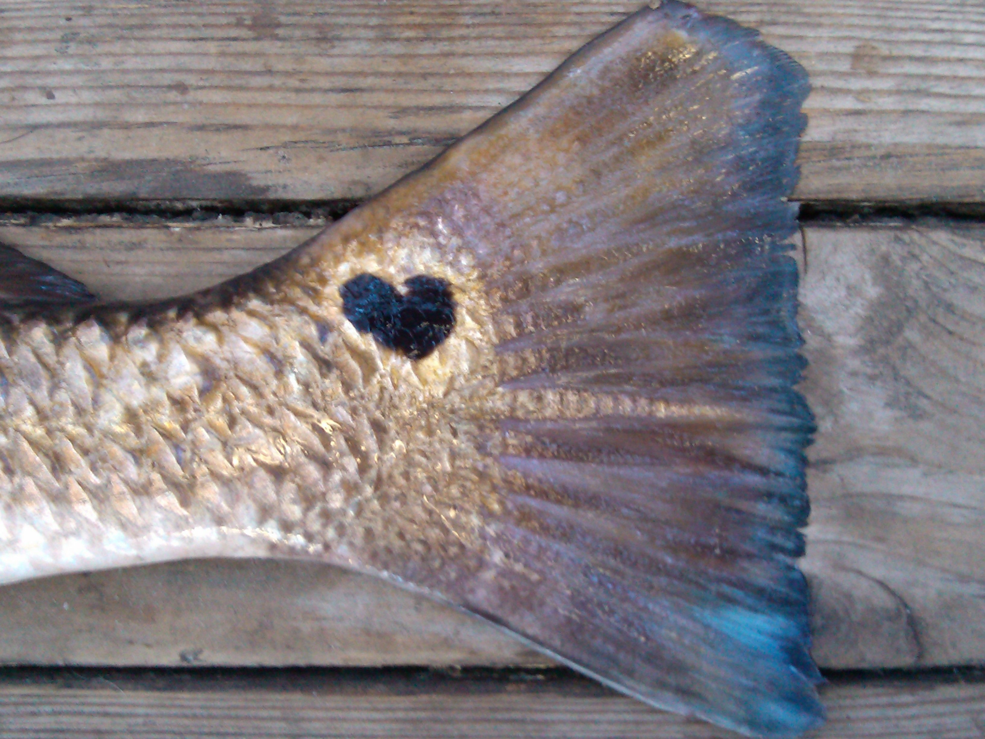 Texas loves their Redfish! - | It's a Skiff Life | Saltwater fishing