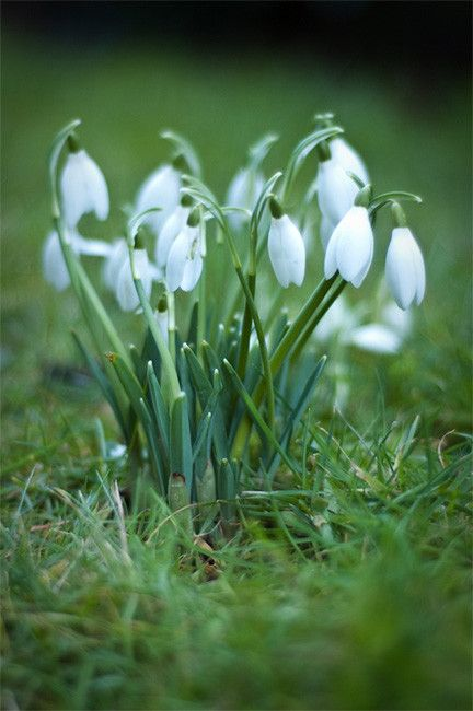 It S Springtime Spring Flowers Beautiful Flowers White Flowers
