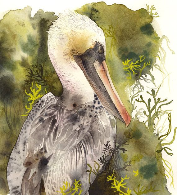 Brown Pelican Print Nature Sea Bird Pelican Art Watercolor
